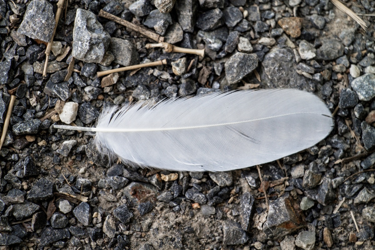 Cuentos para reflexionar: el águila que no sabía quién era